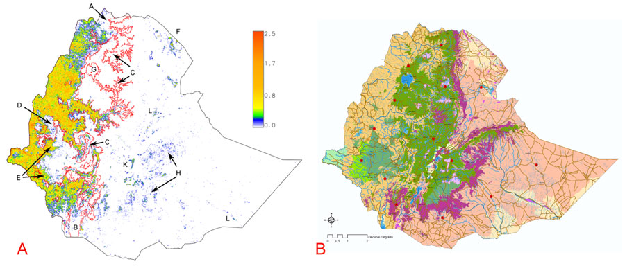 The Flora Of Woody Plants And Vegetation On The Horn Of Africa